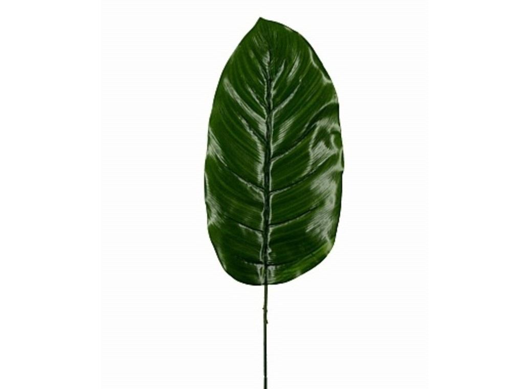 Diffenbachia Leaf